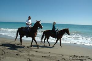Beach Tours On Horseback Hutchinson Island